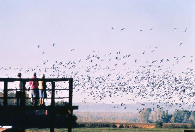 Bird Watching Picture