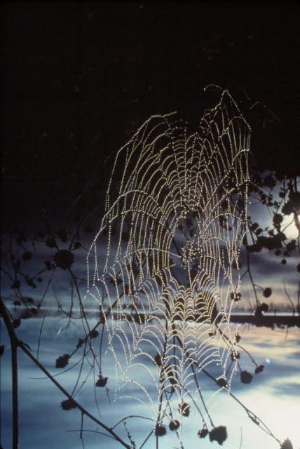 Spiderweb at Sunrise Picture