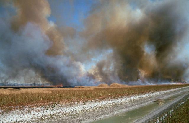 Prescribed Burn for Habitat Management Picture