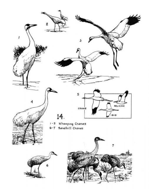 Birds 14 Picture