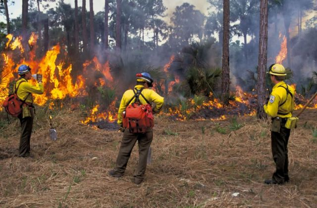 USFWS firefighters monitor prescribed burn Florida Panther Picture