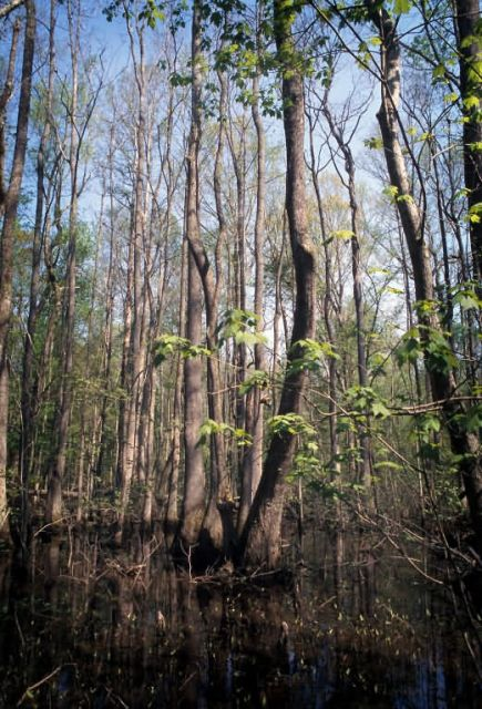 WOE116 Conservation Easement in Virginia Picture