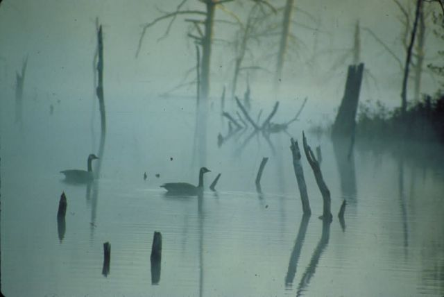Sunrise on a Beaver Flowage Picture