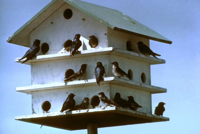 Purple Martin Bird House Picture