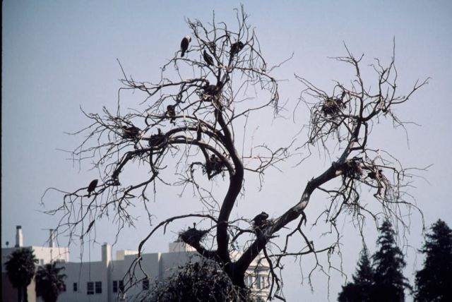 WO19 Cormorants Picture