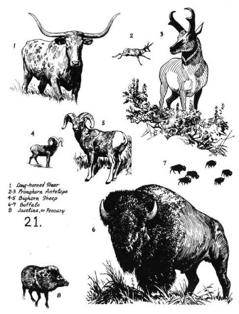 Mammals 21 Picture
