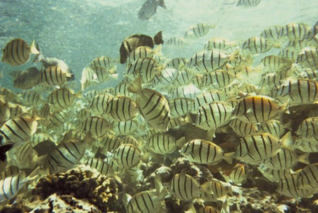Reef Fish Picture