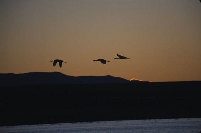 Sandhill Cranes and Sunrise Picture