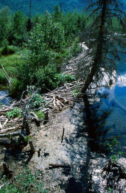 Beaver Dam Picture