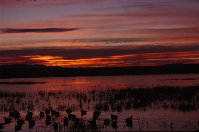 Sunrise at Bosque Del Apache National Wildlife Refuge Picture