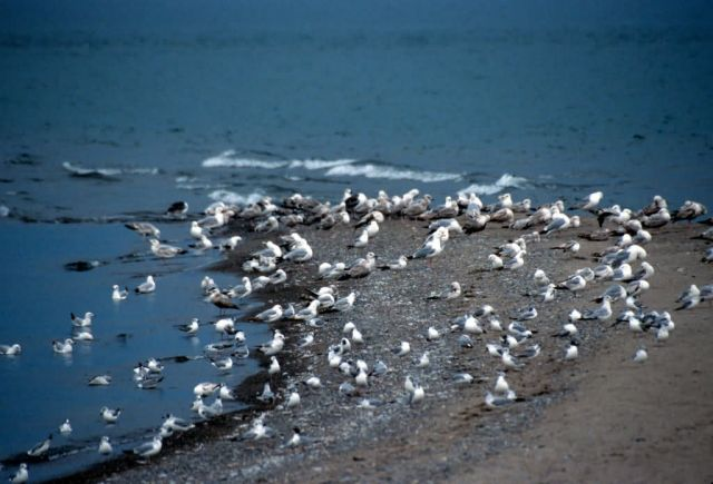 Point Pelee National Park Picture