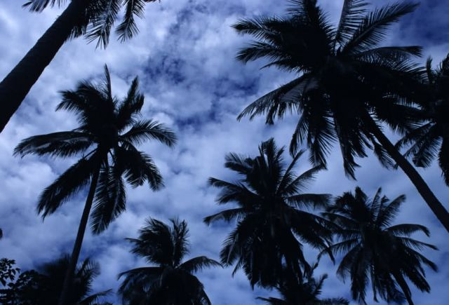 Palm Trees and Sky Picture