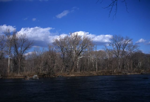 Potomac River and Forest Picture