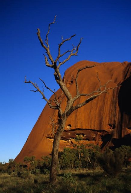 Tree in Front of Rock Formation Picture