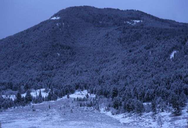 Mountain Forest in Winter Picture