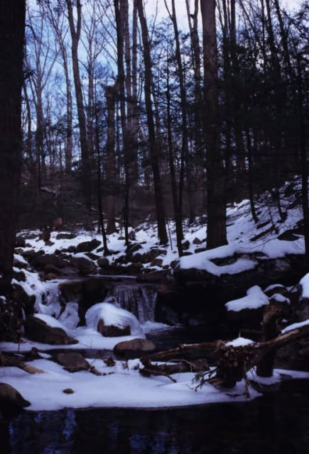 Waterfall in Little Stoney Creek Picture
