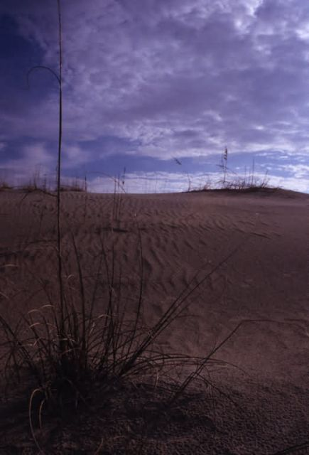 Sand Dune Formation Picture