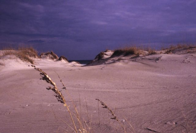 Sand Dune Formations Picture