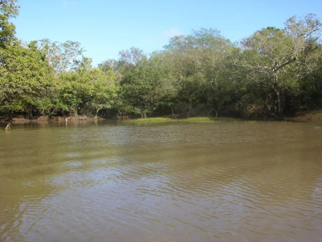 Tebicuary River and Gallery Forest Picture