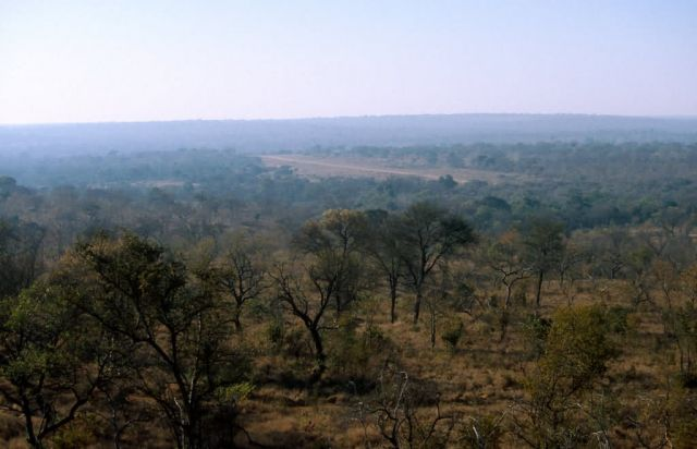 Kruger National Park Picture