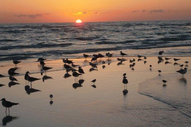 Sea Gulls At Sunset Near An Ocean Picture