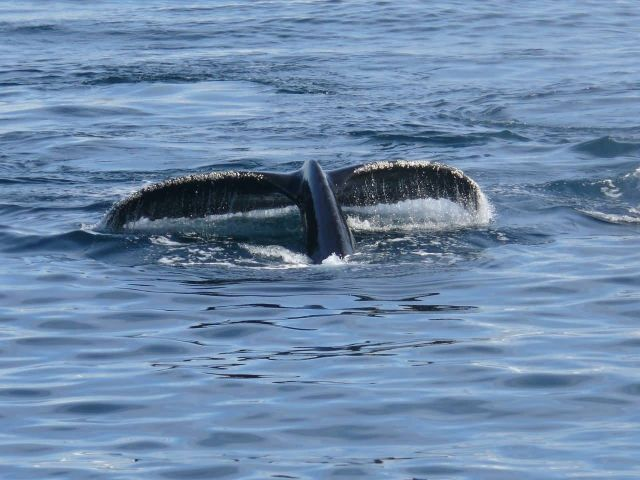 Whale Near Antarctica In Southern Ocean Picture
