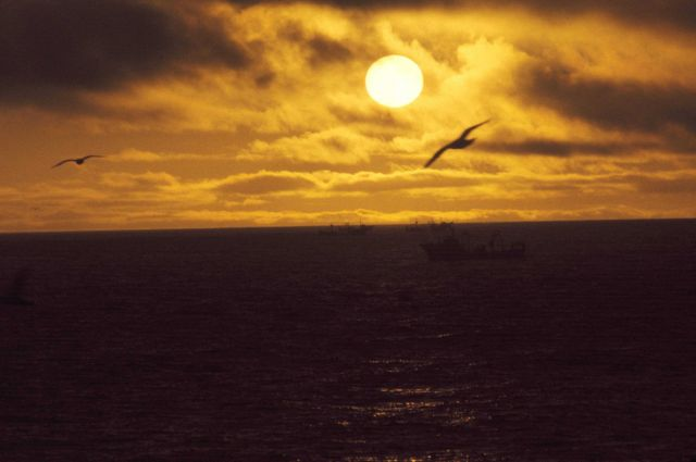Birds and crab fishing vessels silhouetted in a spectacular Bering Sea sunset. Picture