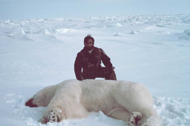 Helicopter pilot Budd Christman with sedated polar bear - Ursus maritimus Picture