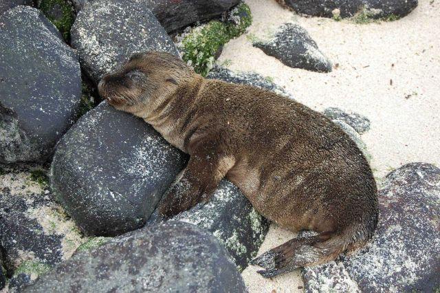 Sea lion pup. Picture