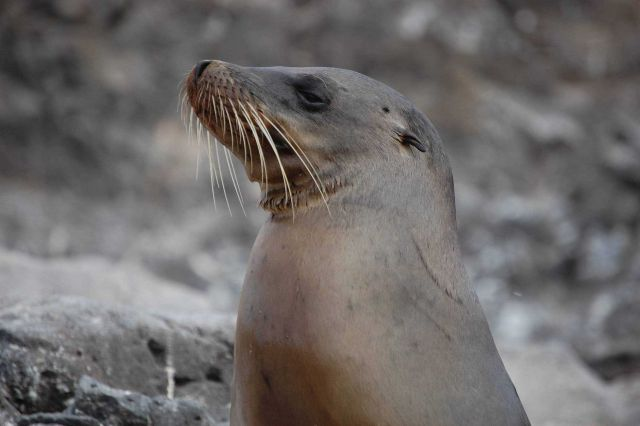 Sea lion. Picture