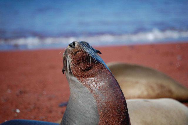 Sea lion. Picture