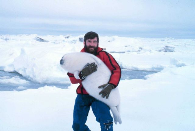 Budd Christman and a new friend - a ribbon seal pup, Phoca fasciata. Picture