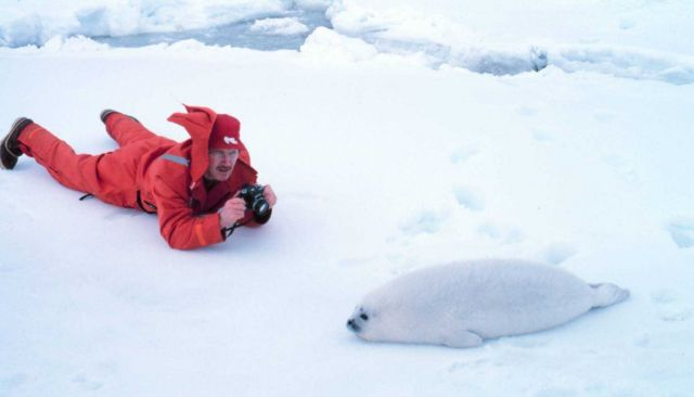 A photograph of a photographer - John Burns of the Alaska Department of Fish and Game with a ribbon seal pup - Phoca fasciata. Picture
