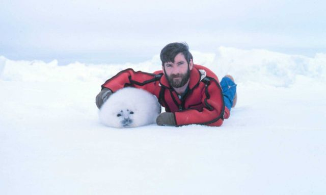 Helicopter pilot Budd Christman with a pal - ribbon seal pup, Phoca fasciata. Picture