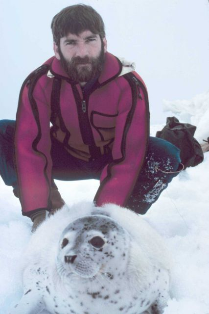 Helicopter pilot Budd Christman assisting with tagging of spotted seal pup. Picture