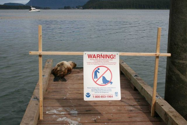 NMFS Enforcement and Protected Resources mark a no-entry zone to protect a sick juvenile Steller sea lion. Picture