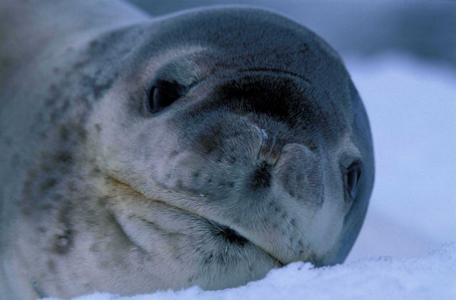 Seal pup. Picture