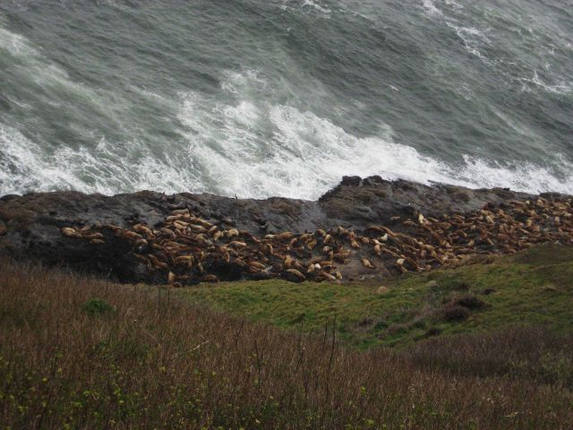 Sea lions. Picture