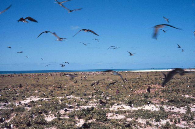 Marine birds, birds, birds filling the sky. Picture
