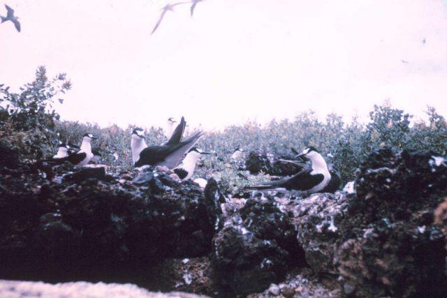 Beautiful unidentified birds. Picture