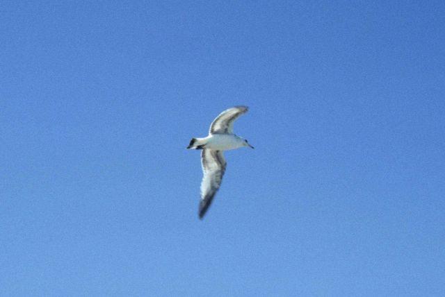 Sea gull. Picture