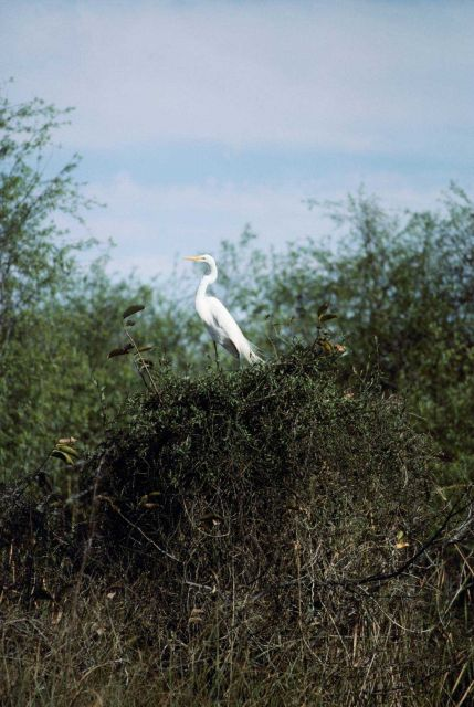 White heron. Picture