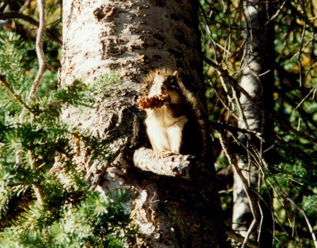 Squirrel. Picture