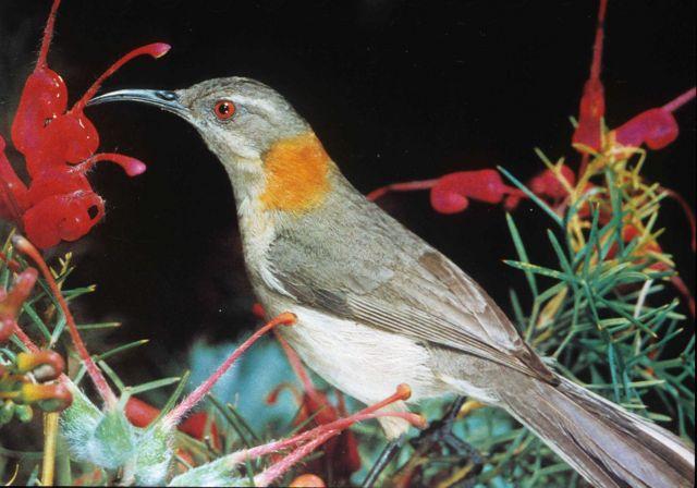 Unidentified bird. Picture
