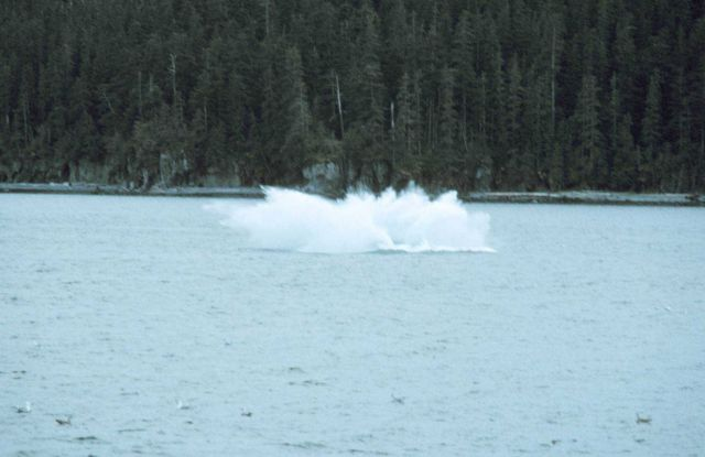 Splash as humpback - Megaptera novaeangliae - hits the water after breaching. Picture