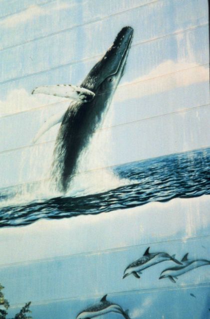 Building mural with humpback whale breaching and a dolphin below. Picture