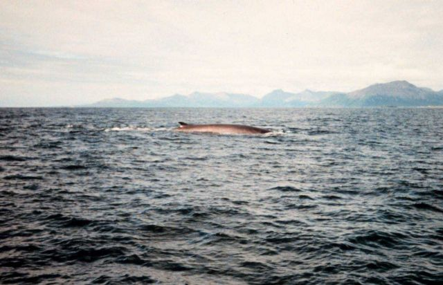 Whale. Picture
