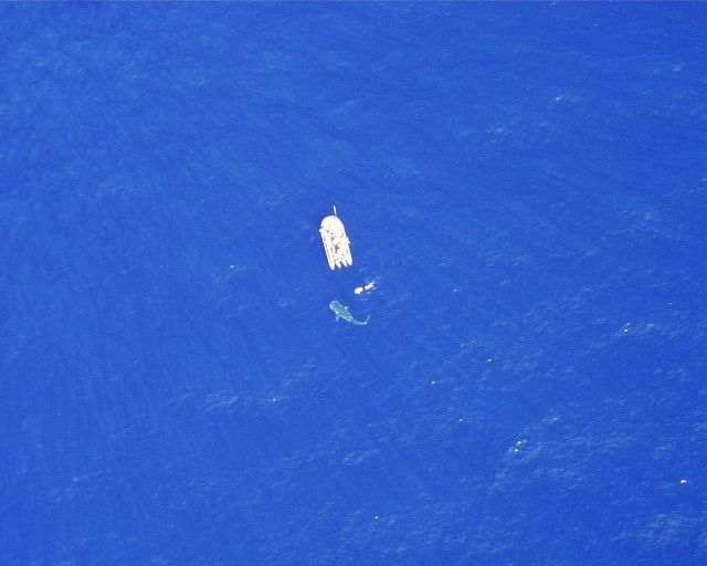 Whale shark as seen from DAVID STARR JORDAN spotter helicopter. Picture