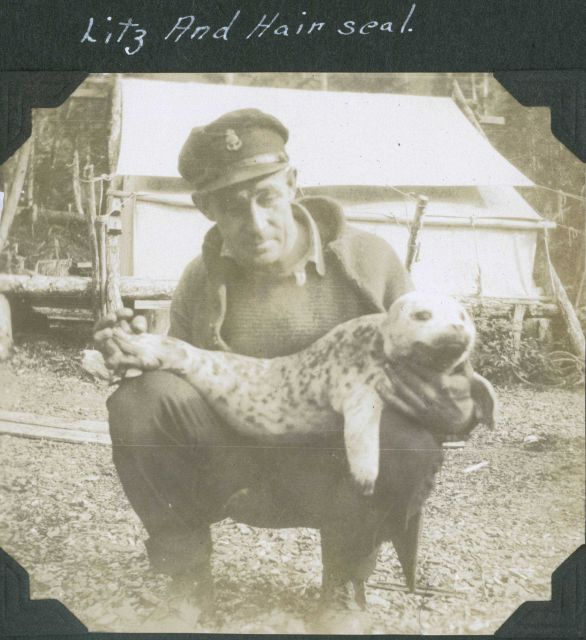 A crewman from a C&GS ship in Alaska with a harbor seal pup (Phoca vitulina) . Picture