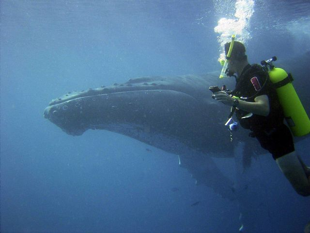 Lieutenant Commander Joe Pica observing a curious humpback whale who came to visit during recovery of underwater acoustic current meter. Picture